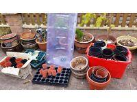 Garden stuff - pots, canes, cloches