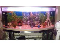 4' Tropical fish tank full setup plus fish