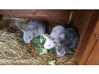 Baby rabbits muliti age with mothers