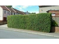 Hedge Cutting, Slabbing, Graveling & More