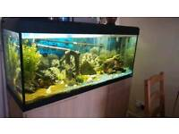 Fish Tank, 300 litre. Whole set up included.