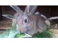 2 beautiful bunnies left!