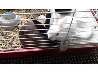 2 small furry rabbits