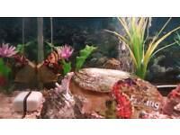 Aquarium fishes for sale