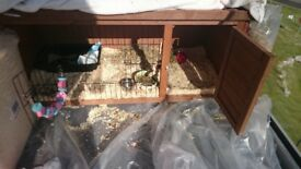 Excellent condition 2 week old rabbit/guinea pig hutch