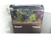100 lt fish tank and cabinet