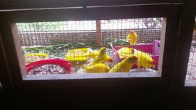 KAKARIKIS 10 BIRDS