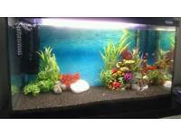 Tropical Aquarium - Perfect starter kit