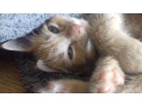 Kittens. 2 girls and 2 boys left
