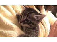 6 adorable kittens for sale!