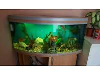 Aquarium fish tank all setup