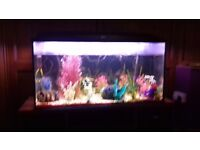 Fish tank and fish and accessories