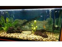 Fluval 200litre fish tank and fish from neons to barbs