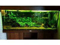 Juvel 250l for sale