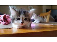 2x kittens
