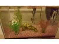 Large fish tank and fish