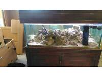 Reduced 22/4 4pm 4ft Marine (or tropical / turtles) fish tank full set up