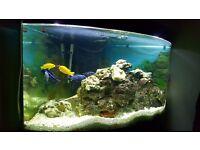 Juwel 350L black tropical fish tank
