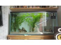 Fish tank 4ft x2ftx1ft