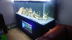 6ft aquarium tank opti front