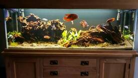 Aqua Oak 180cm 6ft Doors & Drawers Aquarium and Cabinet with optional extras