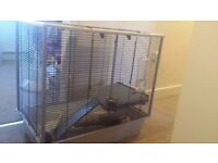 Two male black and white rats with cage food and bedding £60