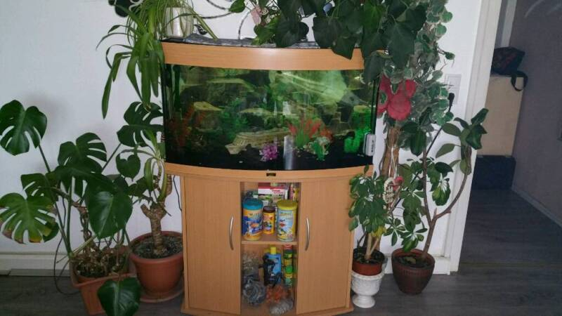 sch nes gepflegtes juwel aquarium in dortmund dortmund eving aquarium und aquaristikzubeh r. Black Bedroom Furniture Sets. Home Design Ideas