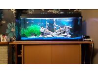Juwel rio 180 fish tank setup