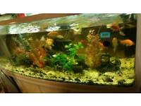 Fish tank with fishes for sale!