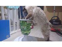 *** CAT FOOD TREE *** CATIT | MUST HAVE!!
