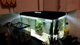 aquael leddy 105 liter tank