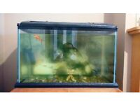 70 Liter Fish Tank With Lights Perfect for Tropical Or Cold Water