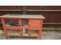 Female Rabbit with new hutch free to good home
