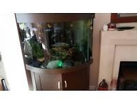 Corner aquarium 190L
