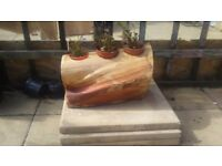 Lobelia log planter