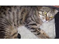 !!!!!!!! MISSING CAT !!!!!!!! PLEASE HELP !!!!!!!!