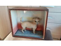 Very Rare Cased Victorian Taxidermy Small Dog