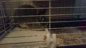 Female rabbit + cage