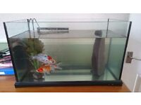 FISH TANK ( with 2,goldfish +2,platys) approx 50/60litre