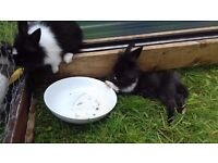 beautiful baby rabbits looking for good homes! 2/3 months old. very friendly call Ruth 07908750534