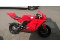 Pit bike racing 125cc 4 strokes (6 months stopped-needs of a service)
