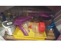 Hamster cadge an accessories