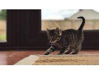 Kitten available for the 1st June