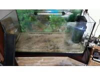Large fishtank