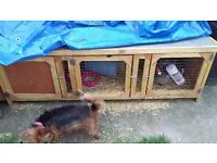 Lion Lop Rabbit, Guinea pig Hutch and Run