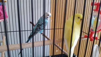 Bird cage - black