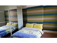 Professional painting and decorating services in very fair prices