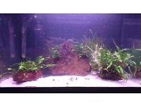5 Lava Rocks With Plants For Fish Tanks/Aquariums
