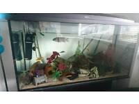 3ft fishtank