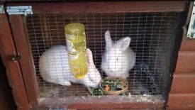 Rabbits, Double hutch, 6ft by 4ft rabbit run,